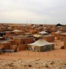 """think tank CPLATAM: L'Algérie a créé le """"polisario"""" et lui apporte un appui militaire"""